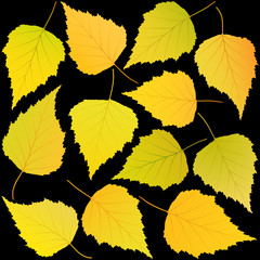 Wall Mural - autumn birch leaves black background