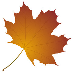 Wall Mural - autumn maple leaf