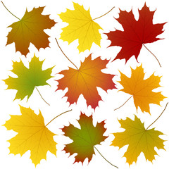 Wall Mural - autumn maple leaves