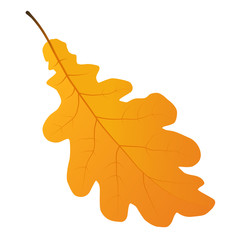 Wall Mural - autumn oak leaf