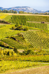 Wall Murals Vineyard autumnal vineyards near Falkenstein, Lower Austria, Austria