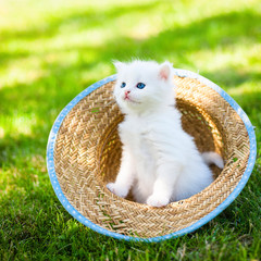 Little kitten in a hat on the grass,