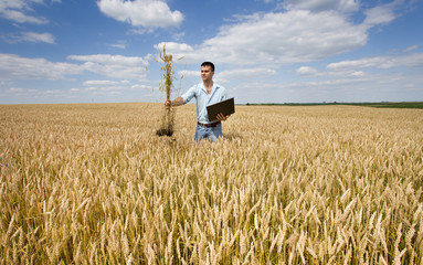 Farmer with laptop and wheat bunch