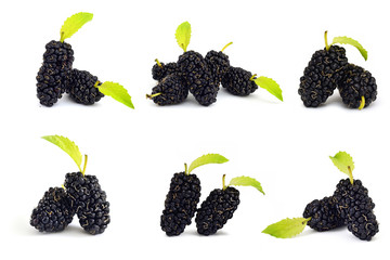Collection mulberry fruit isolate on white baackground