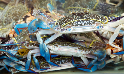 Blue crab seafood close-up in fish market