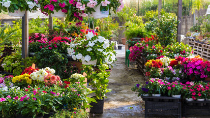 Flowers at the florist. Petunias, marigolds, fuchsias and others