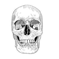 Hand Drawn Skull Sketch. Monochrome Vector illustration for Day of the Death.