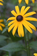 Żółty kwiatek