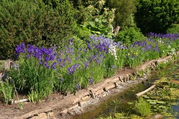 Ogród - ogródek - irysy i oczko wodne