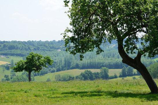 Paysage du Pays d'Auge (Normandie)