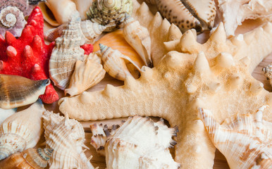 Collection of seashells on a wooden background