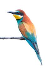 European bee-eater on white