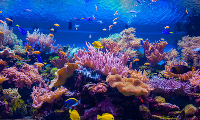 Photo Blinds Coral reefs tropical fish on a coral reef