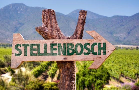 Stellenbosch wooden sign with vineyard background