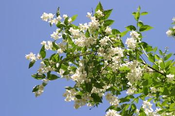 Kwitnące drzewa, kwiaty na gałęziach drzew, pąki