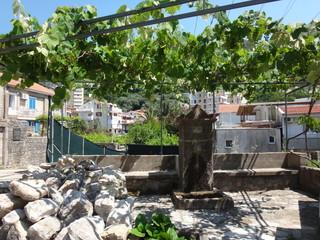 Двор частного дома с растущей виноградной лозой