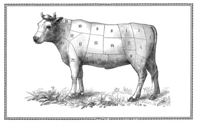 Old Beef chart with numbered cuts, collage and elaboration from antique engravings