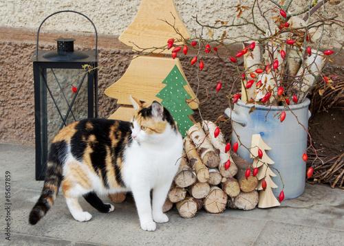 Katze vorm haus mit dekoration zu weihnachten stockfotos for Dekoration zu weihnachten