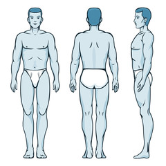 Man body model. Front, back and side human poses