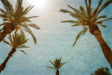 Branches of palms under blue sky