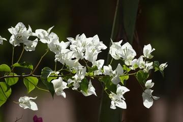 Obraz Kwiat, kwiaty, kwiatek, kwiatki - fototapety do salonu
