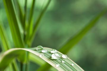gouttes de pluie sur feuille de bambou