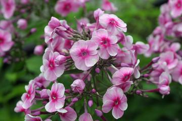 Kwiat, kwiaty, kwiatek, kwiatki,