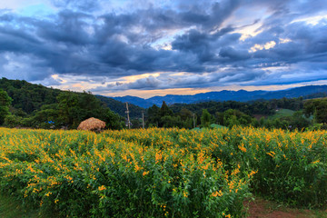 Flowers on hill with beautiful landscape, Mon Jam, Chiang Mai,Thailand
