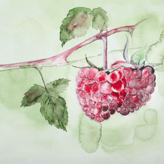 Raspberries on a branch