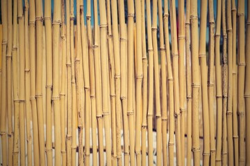 fence from a dry bamboo with retro effect