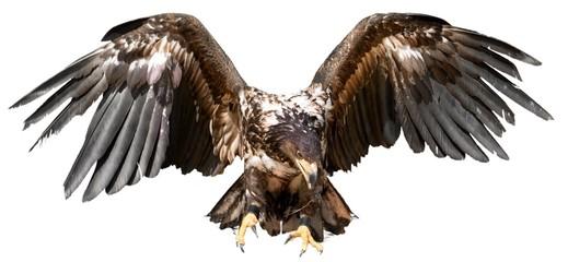 Hawk, Bird, Eagle. Fototapete