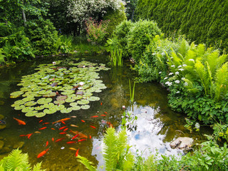 Idyllischer Gartenteich mit Fischen