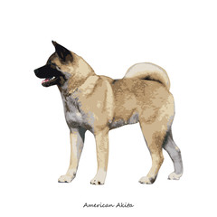 Akita dog breed illustration