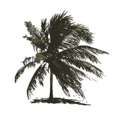 Tropical palm tree for your design