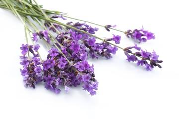 Tuinposter Lavendel Lavender, Lavender Coloured, Isolated.