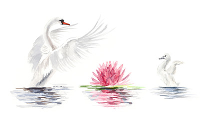 Swan floats. Swan with baby birds. Watercolor hand drawn illustration.