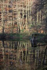 Herbstlicher Teich in einem Buchenwald