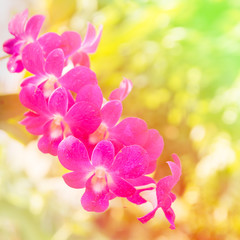 beautiful orchid background