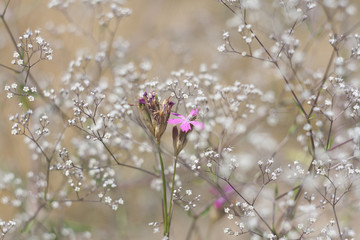 Grass and wildflowers, sunny summer meadow, selective focus