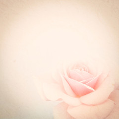 vintage color rose in soft color style on mulberry paper texture for background