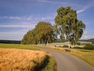 Straße durch eine sommerliche Kulturlandschaft