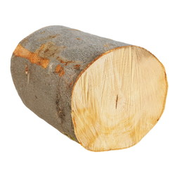 beech wood, stump log fire wood isolated on white background with clipping path