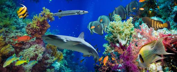 Tropikalna ryba Anthias z koralami i rekinami