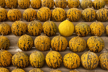 Turkish yellow melons stacked in the market place