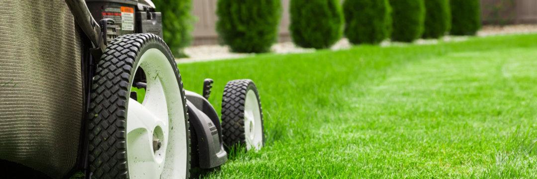 Lawn mower cutting green grass in backyard, mowing lawn