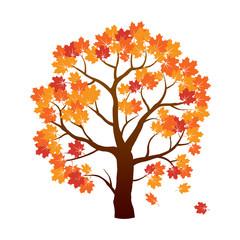 Color Autumn Maple Tree. Vector Illustration.