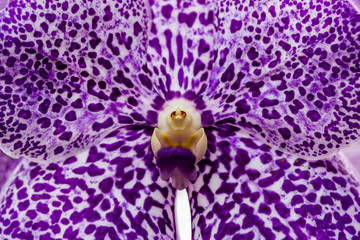 Very beautiful orchids flower.