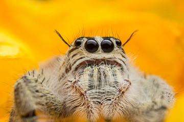 Door stickers Hand drawn Sketch of animals Jumping spider