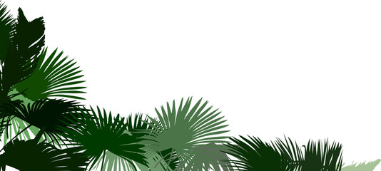 corner from green palm tree leaves