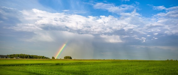 Fototapeta Tęcza na polu pszenicy podczas letniego deszczu